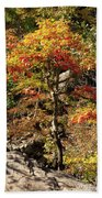 Autumn Color In Smoky Mountains National Park Beach Towel