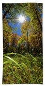Autumn Forest Delight Beach Towel