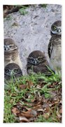 Baby Burrowing Owls Posing Beach Towel