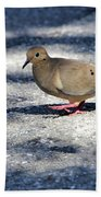 Baby Mourning Dove Beach Sheet