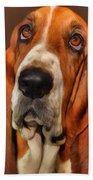 Basset Dog Portrait Beach Sheet