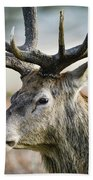 Beautiful Red Deer Stag Cervus Elaphus With Majestic Antelrs In  Beach Towel