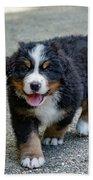 Bernese Mountain Dog Puppy 2 Beach Towel