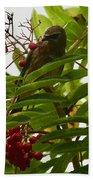 Berries And Waxwing Beach Towel