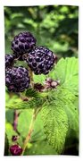 Black Raspberries  Beach Towel