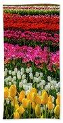Blazing Tulips Beach Sheet