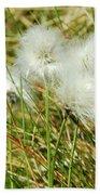 Bog Cotton On The Moor Beach Towel