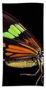 Boisduval's Tiger Moth Beach Towel