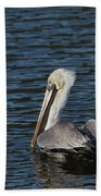 Brown Pelican Beach Towel by Jemmy Archer