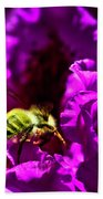 Bumble Bee On A Rhodedendron  Beach Towel
