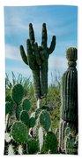 Cactus Twins Have Company Beach Towel