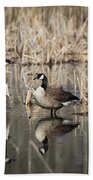 Canada Geese On The Marsh Beach Towel by Jemmy Archer