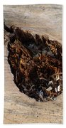 Canal Stumps-018 Beach Towel