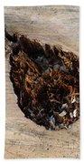 Canal Stumps-018 Beach Sheet