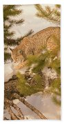 Cat Walk Beach Towel