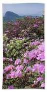 Catawba Rhododendron Table Rock  Beach Sheet