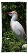 Cattle Egret With Breeding Feathers Beach Towel