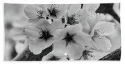 Cherry Blossoms 2019 E Beach Sheet