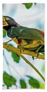 Chestnut-eared Araacari Beach Towel