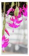 Christmas Cactus In Razzle Dazzle Pink Beach Towel