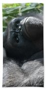 Close-up Shot Of Silverback Gorilla Making An Angry Face Beach Towel