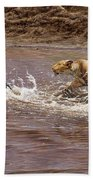 Closing In - Lion Chasing A Zebra Beach Towel by Alan M Hunt