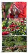 Coming Up Roses Beach Sheet