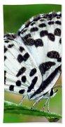 Common Pierrot Butterfly Beach Towel