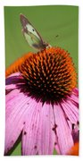 Cone Flower Butterfly At Rest Beach Towel