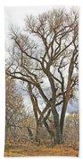 Cottonwood Az Bayou Leafless Tree Sky Clouds Path 31262019  Beach Towel