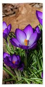 Crocus In Spring 2019 I Beach Sheet
