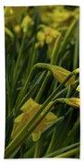 Daffodil Starlight Beach Towel