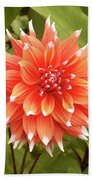 Dahlia Bloom Flower Beach Towel