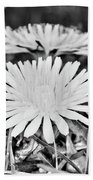 Dandelion Up Close And Personal Black And White Beach Towel