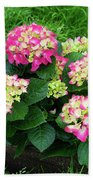 Decorative Floral Pink Hydrangeas C031619 Beach Towel by Mas Art Studio
