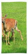 Deer Looking At You Beach Towel