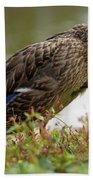 Duck 3 Beach Sheet