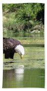 Eagle's Drink Beach Towel