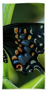 Eastern Black Swallowtail - Closed Wings Beach Towel