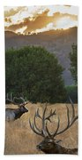 Elk Sunset Beach Towel