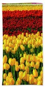 Endless Tulip Fields Beach Towel