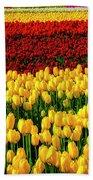 Endless Tulip Fields Beach Sheet