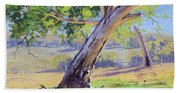 Eucalyptus Tree Australia Beach Towel