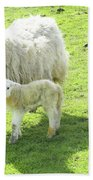 Ewe With Lambs Beach Towel