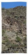Family Of Saguaro Beach Towel
