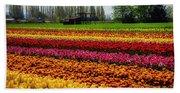 Farming Tulips Beach Towel