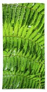 Fern Beach Towel by Nick Bywater