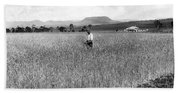 Field Of Wheat Campbell S Plains  Darling Downs Beach Towel