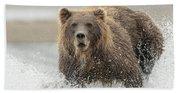 Fish Coastal Brown Bear Of Alaska Beach Towel