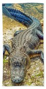 Florida Gator 2 Beach Towel